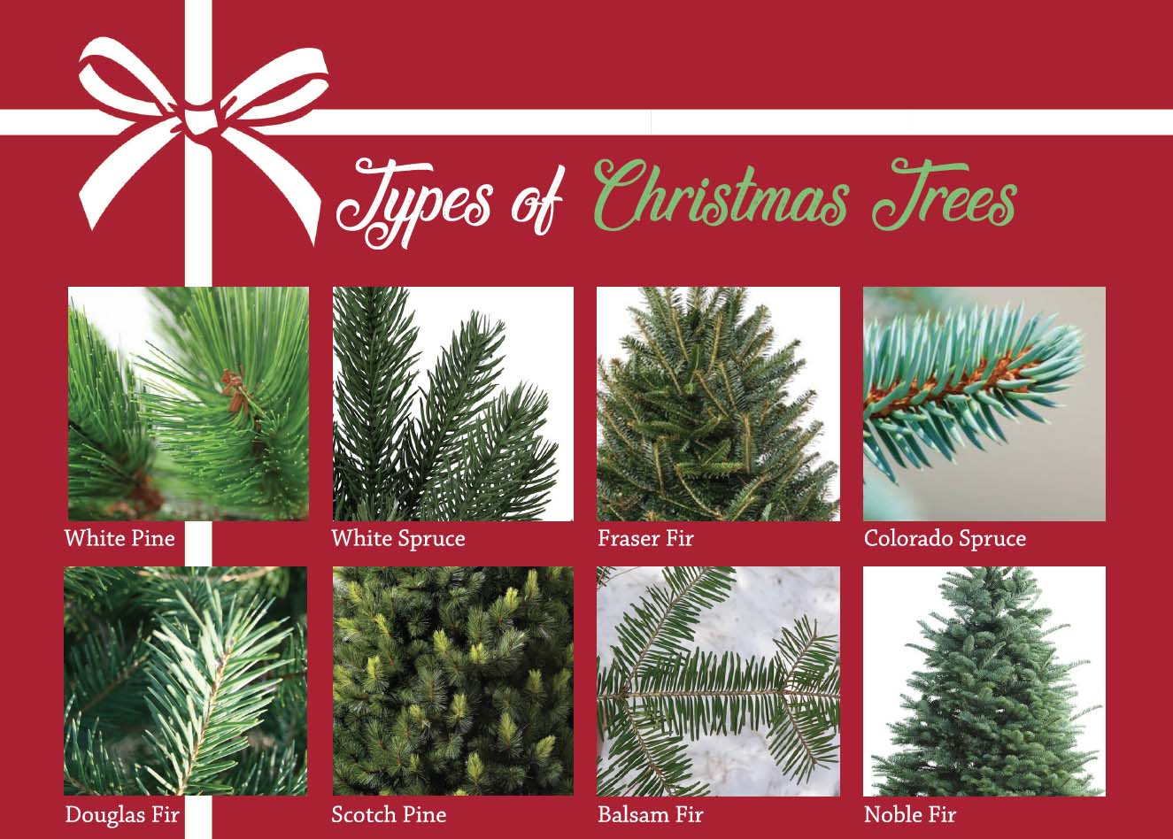 Christmas Tree Types.Types Of Christmas Trees Harrisburg Magazine